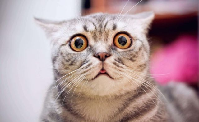 Se vam zdi, da vam je vaša mačka po osebnosti podobna? FOTO: Shutterstock