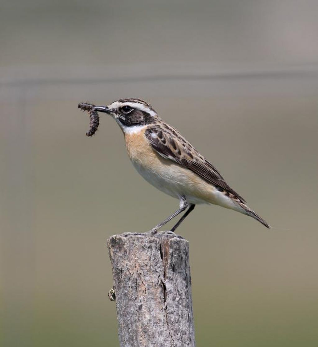 FOTO:Okoljsko in kmetijsko ministrstvo gluha za slabo stanje ptic