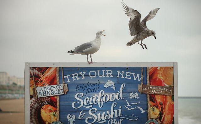 Vročina ogroža tako morsko življenje kot tudi morske ptice. FOTO: Jure Eržen/Delo