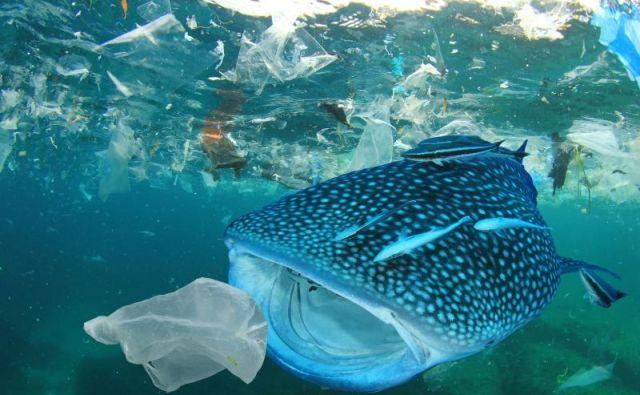 Plastika je poškodovala že na stotine različnih vrst živali. FOTO: Wwf