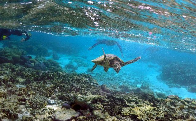 Raziskovalci se sprašujejo, ali bodo današnji otroci že živeli v svetu brez želv. FOTO: David Gray/Reuters