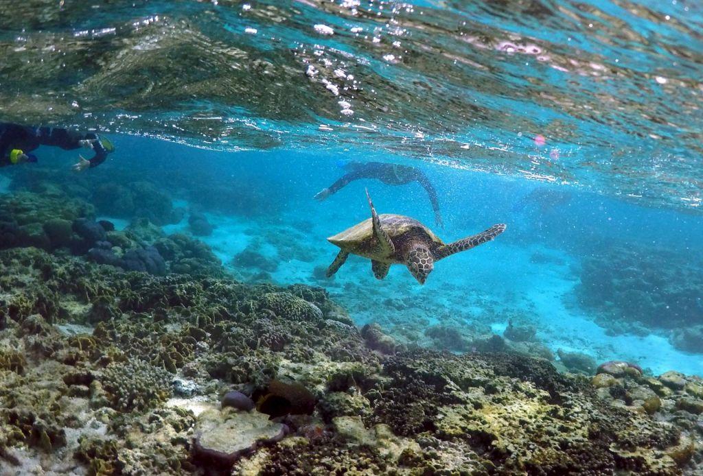 Polovica mrtvih želvic s polnimi želodci plastike