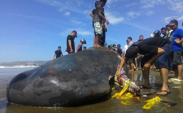 Junija lani je na Tajskem poginil kit, v katerem so našli več kot 80 plastičnih vrečk. FOTO: Shutterstock