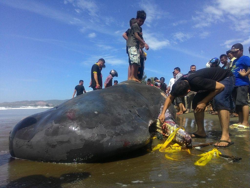»Največ plastike, kar so jo kadarkoli našli v kitu«
