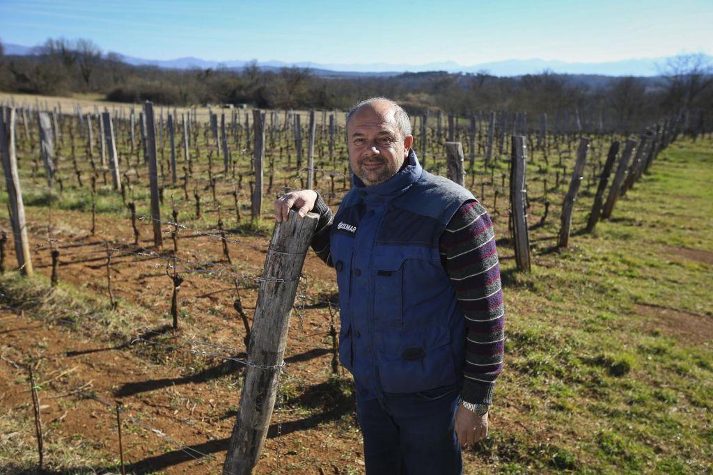 Zamejski vinogradniki se širijo na slovenski Kras