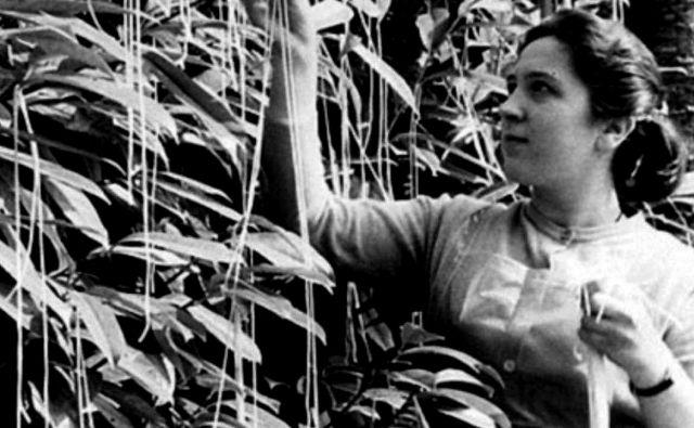 Ko je leta 1957 BBC poročal o obilni letini špagetov, ki so jih obrodila drevesa v Švici, so gledalci prosili za napotke, kako bi si jih vzgojili tudi na britanskih tleh. FOTO: izsek iz posnetka BBC