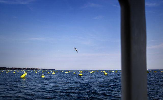 Sredine trditve ministra so v celoti zavrnili in poudarili, da dogajanje na morju 24. marca v nobenem primeru ni izstopalo. Fotografija je simbolična. FOTO: Voranc Vogel