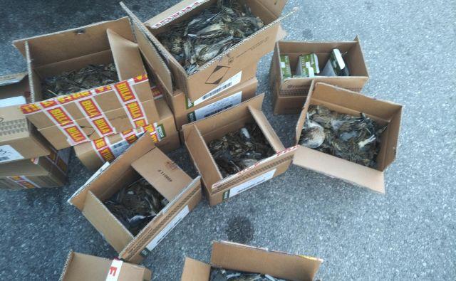 Pošiljke mrtvih ptic so največkrat namenjene proti Italiji. FOTO: Tjaša Zagoršek, Dopps