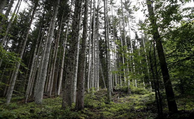 Glavni cilj akcije je javnost obveščati o pomenu ohranitve gozdov in narave. FOTO: Blaž Samec