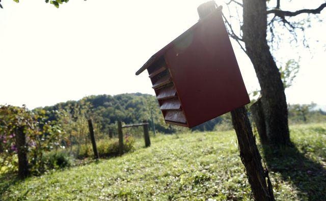 Med projekti je tudi čebelarska kmetija FOTO: Uroš Hočevar/Delo