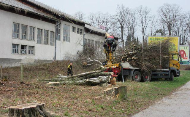 Na območju nekdanje mlekarne so posekali drevesa, ker da bi v prihodnje ovirala gradnjo vila blokov. FOTO: Špela Kuralt/Delo