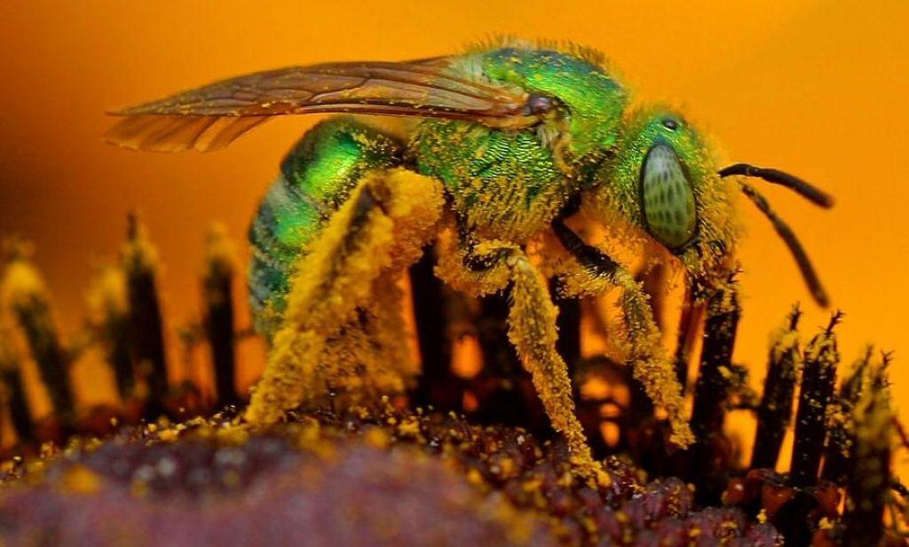 V očesu Tajvanke odkrili čebele, hranile so se z njenimi solzami