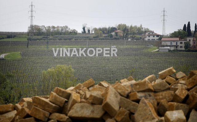 Vinakoper upravlja 600 hektarov vinorodnih zemljišč na atraktivnih lokacijah po slovenski Istri. Foto Blaž Samec