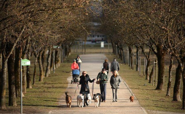 """""""Pred časom smo peljali na sprehod družinsko zverino, kar srečamo par, ki nas pozdravi: »Ta pa rad jè...« Ozrem se: za mano gresta moja boljša in naša štirinožna polovica. »Ali mislite mojega psa ali mojega moža?« Opravičila nismo dočakali..."""" FOTO: Jure Eržen/delo"""