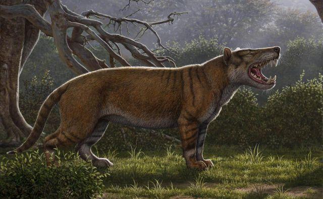 <em>Simbakubwa kutokaafrika</em> je živel pred 22 milijoni let v Afriki in je bil večji od severnega medveda. FOTO: Mauricio Anton/Ohio University/AFP