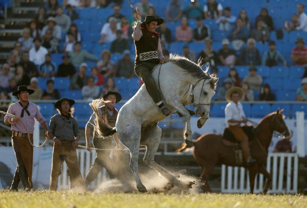 FOTO:Kako ukrotiti divjega konja