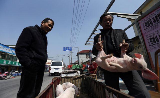 Kitajska je največja pridelovalka in porabnica svinjine na svetu, toda tretjina njene populacije prašičev je sedaj ogrožena. FOTO: REUTERS