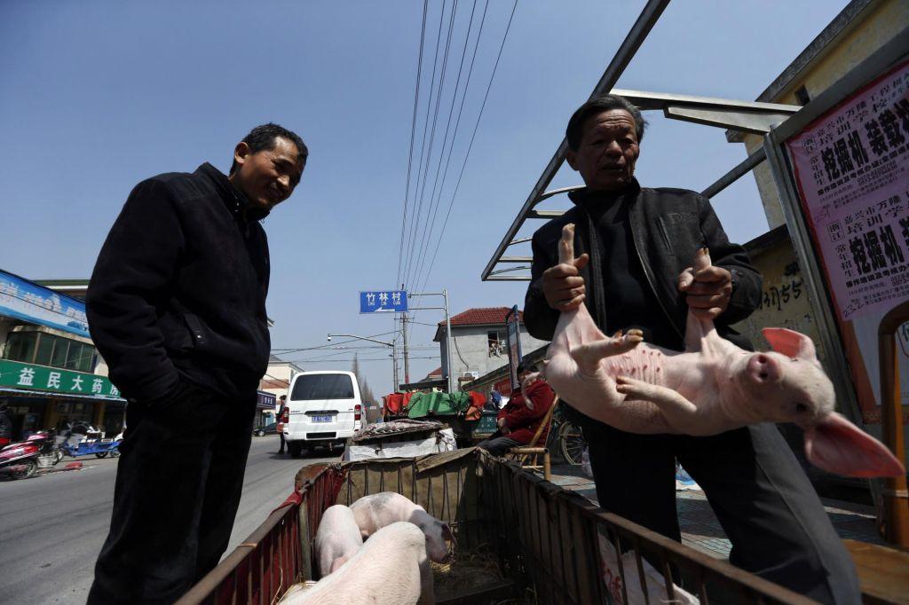 Kitajsko leto bolnega prašiča