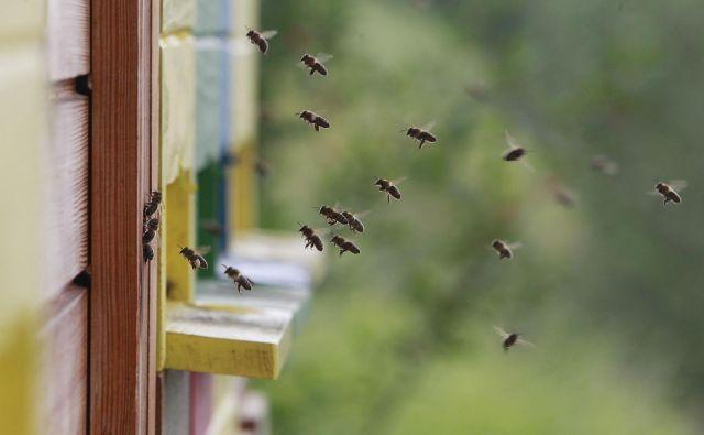Blejski čebelarji organizirano delujejo že okroglih 100 let. FOTO: Leon Vidic/Delo