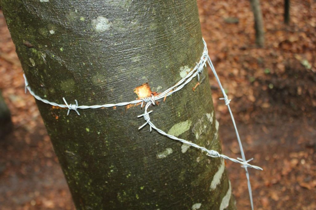 FOTO:Na neurejeni progi neznanci razpeli bodečo žico