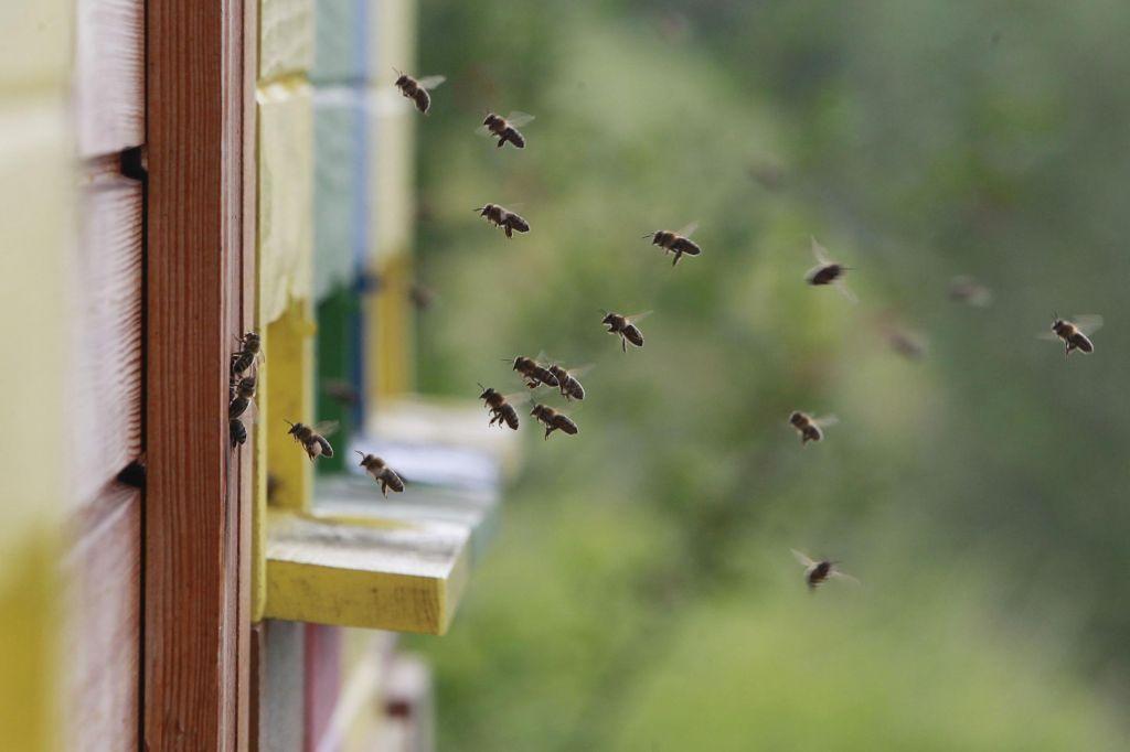 Častitljiv jubilej, stoletnica, blejske čebelarske družine