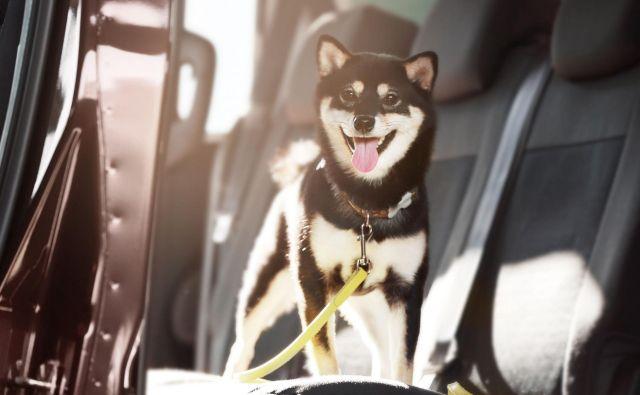 Pes Foto: Shutterstock