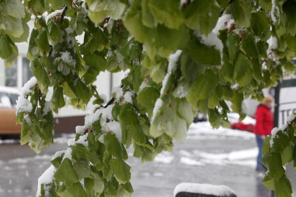 Sneg in pozeba?