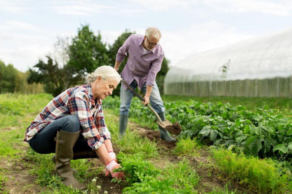 Vaje za varno delo na vrtu