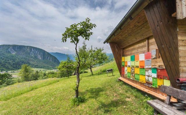 Slovenski čebelnjak bi postavili v vatikanskih vrtovih. FOTO: Shutterstock