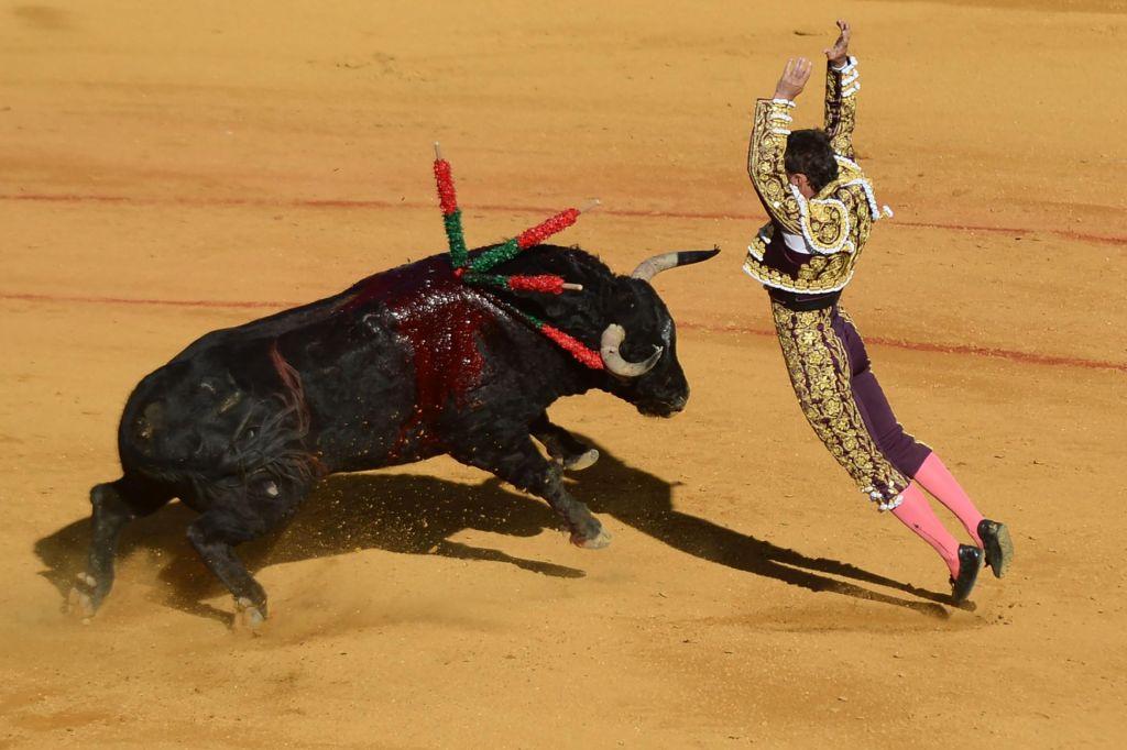 FOTO:Umetnost ali zgolj mučenje živali