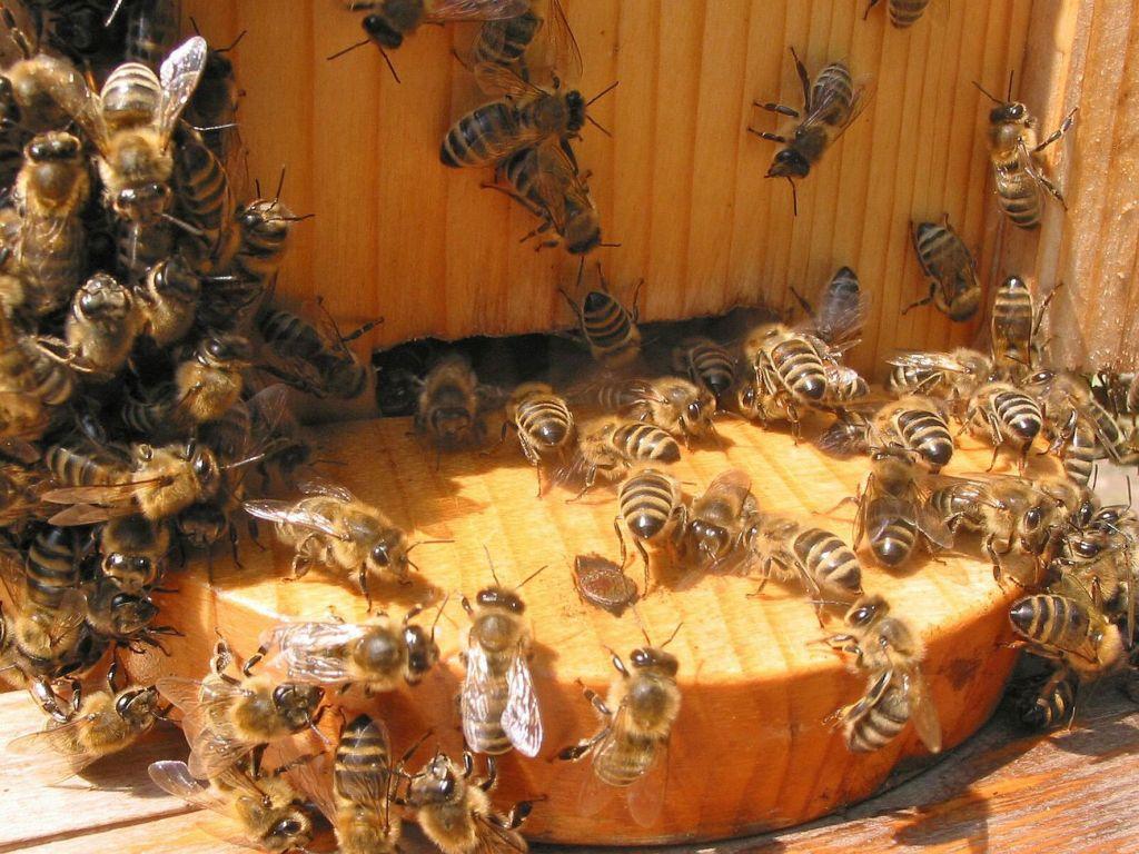 Čebele nas resno opozarjajo na napake
