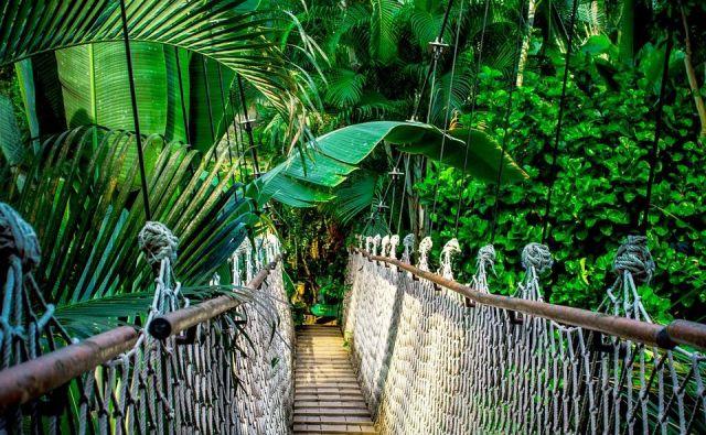 Ekološka zavest proti palmovem olju. Pixabay