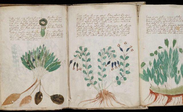 V Voynichevem rokopisu so po mnenju Chesira znanja s področja zdravilnih rastlin, terapevtskih kopeli in astroloških naukov, ki se nanašajo na vprašanja srca, duha in človeške reprodukcije. FOTO: Wikipedia