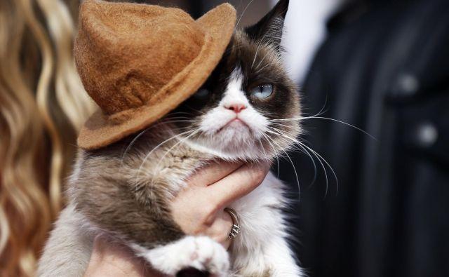 Grumpy cat FOTO: Danny Moloshok Reuters