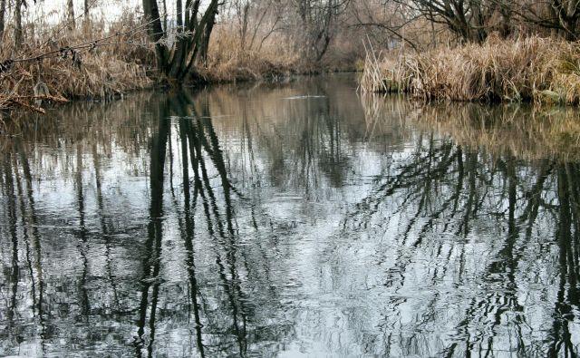 Potok Struga v zaščitenem Krajinskem parku Vrbje. FOTO: Brane Piano