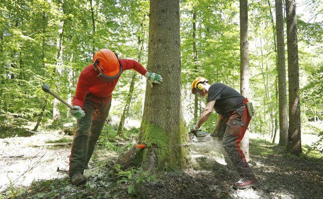Neugodna lastniška struktura slovenskih gozdov ter razdrobljenost gozdne posesti slabo vplivata na učinkovitost in razvoj pa tudi na ekonomičnost delovanja gozdnolesne verige.