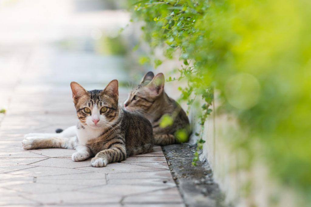 Radovljiški policisti našli mačka in domnevnega storilca