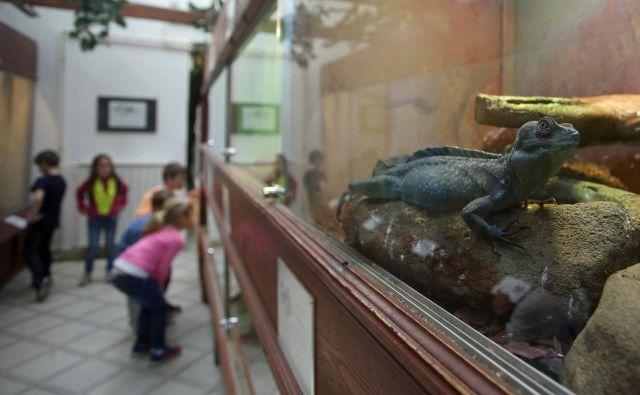 Akvarij-terarij z več kot 170 živalskimi vrstami vsako leto privabi približno 50.000 obiskovalcev. FOTO: Tadej Regent