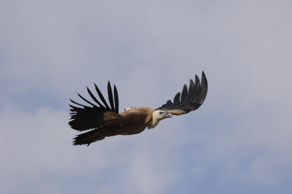 Nezakonito ulovljenih ali ubitih ptic pri nas do 50.000