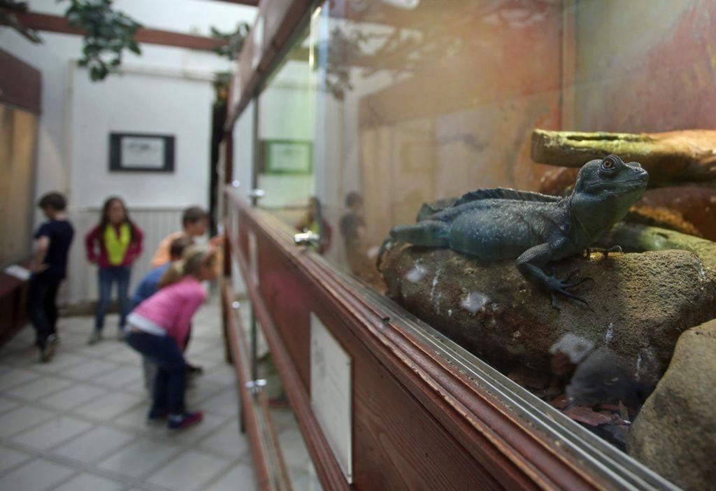 FOTO:Sredi Maribora propada Akvarij-terarij