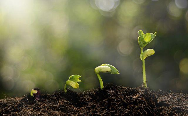 Narava je zaklad, pomagajte nam jo rešiti!<br /> FOTO: Lovethewind Getty/istockphoto