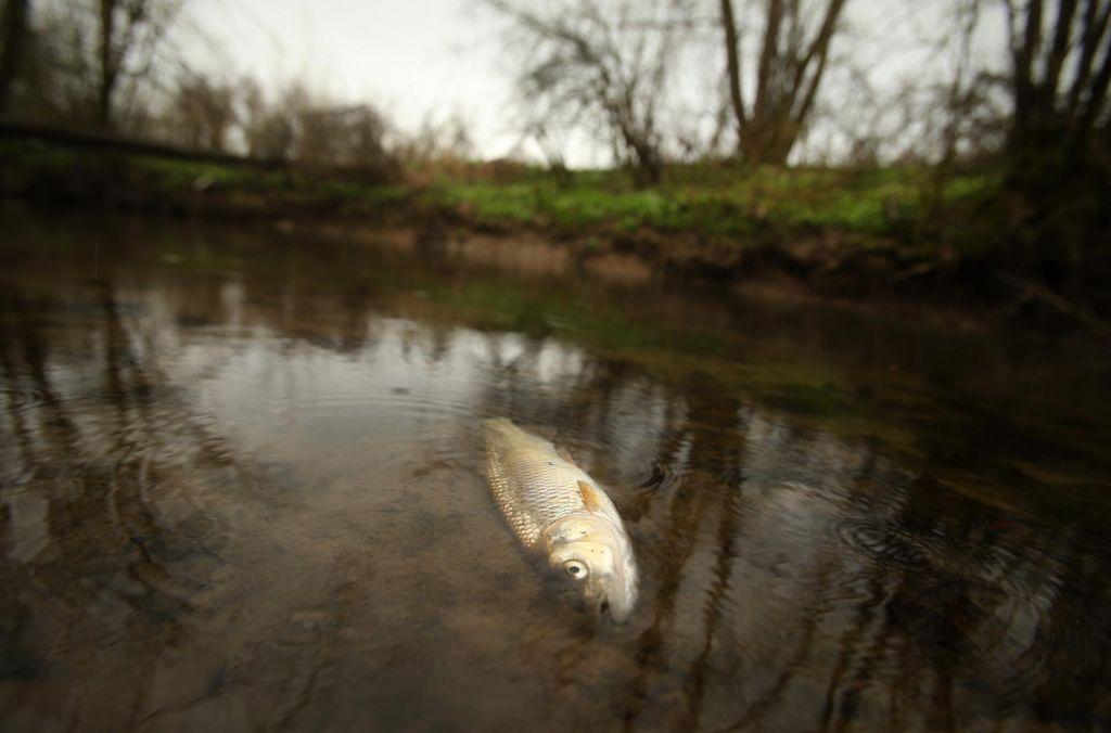 Slovenska narava je v težavah