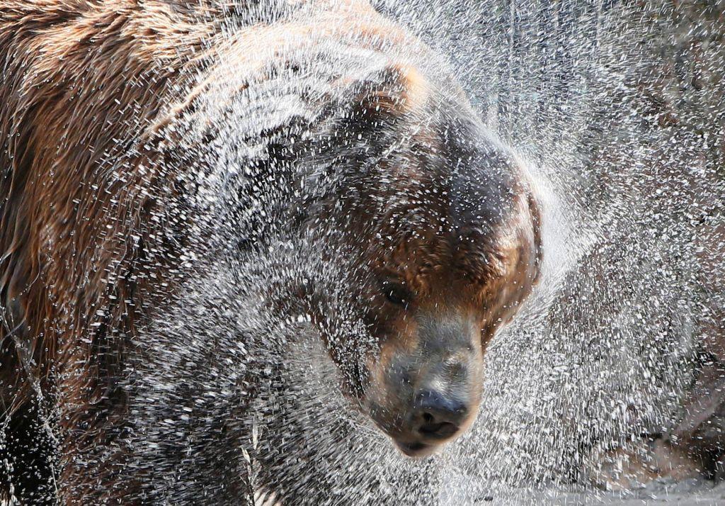 FOTO:Odstrel strogo zaščitene vrste ne sme biti tako samoumeven