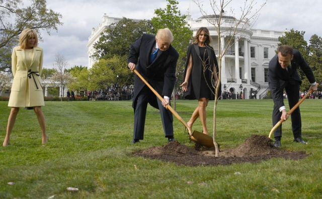 Hrast iz gozda na severu Francije, ki sta ga aprila lani Donald Trump in Emmanuel Macron posadila ob navzočnosti soprog Brigitte in Melanie, ni pognal korenin v ameriških tleh. FOTO: Jim Watson/AFP