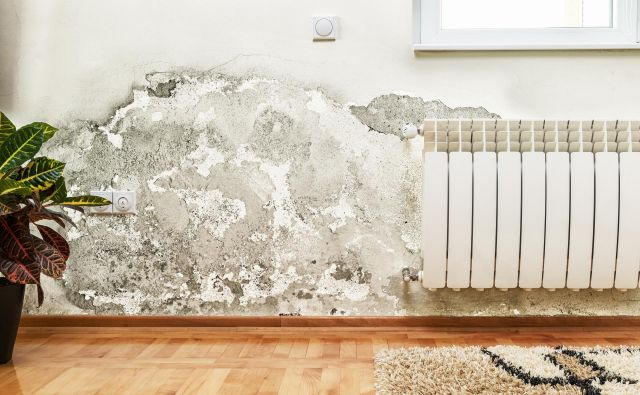 Če se je plesen že razbohotila, bo potreben zahtevnejši poseg. Foto Shutterstock