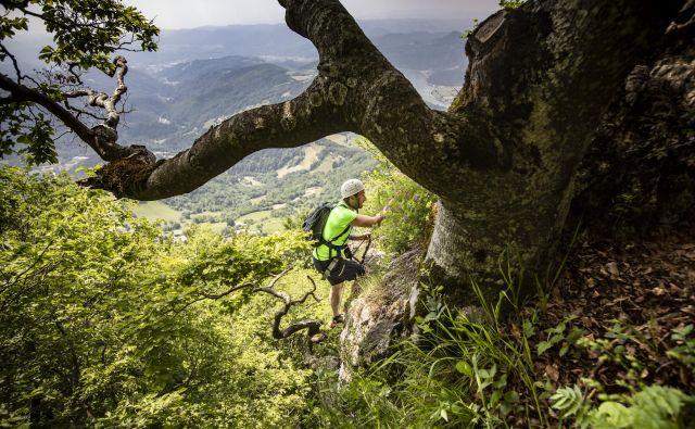 Eden izmed pohodov bo vodil tudi po zelo zahtevni planinski poti. FOTO: Voranc Vogel/Delo