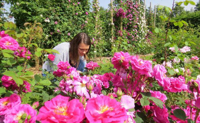 Vrtnice že zapeljujejo z omamnim vonjem in cvetovi vseh barv.<br /> FOTO: Bojan Rajšek/Delo