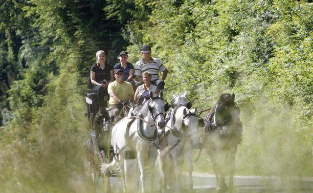 Prizor kot iz nekega davno minulega časa – nemš�ka druž�ina Matern in zgoraj desno Rajko Sinjur z lipicanci na poti od Lipice do Dunaja. FOTO: Mavric Pivk