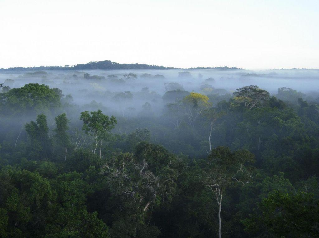 V dveh stoletjih izumrlo več kot 500 rastlinskih vrst