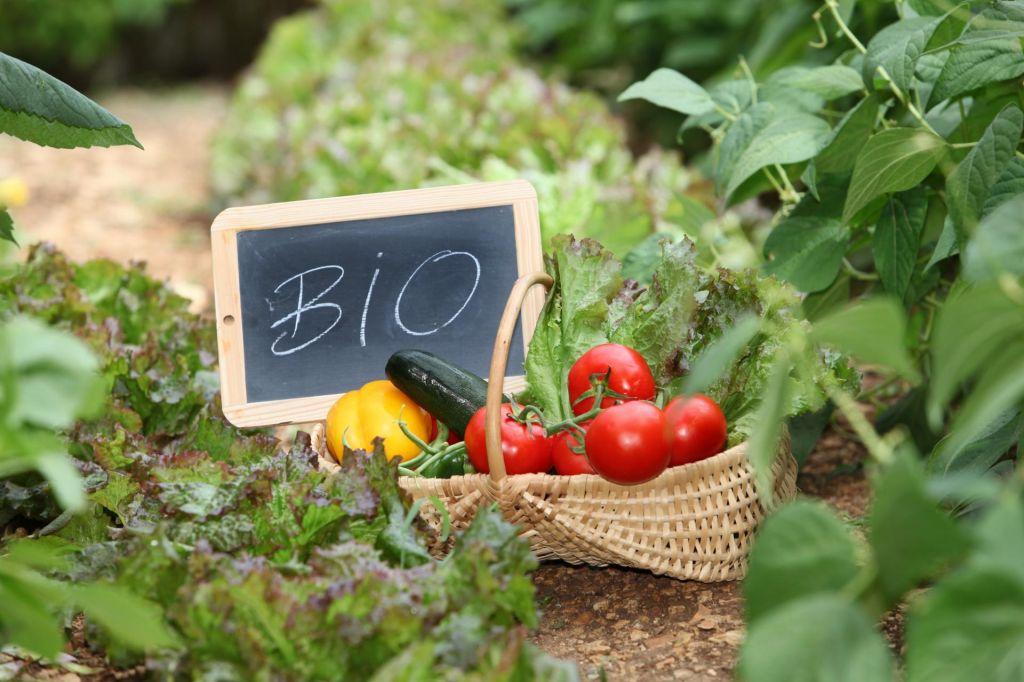FOTO:Bio varuje zdravje planeta, kar je pogoj za zdravje ljudi